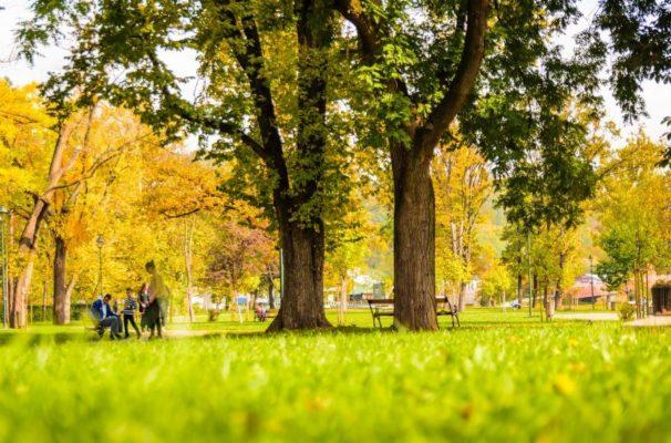 公園の背景